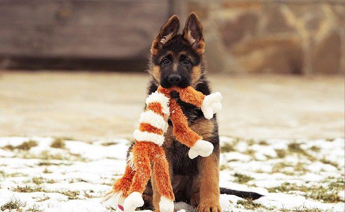 Игрушки для собак своими руками