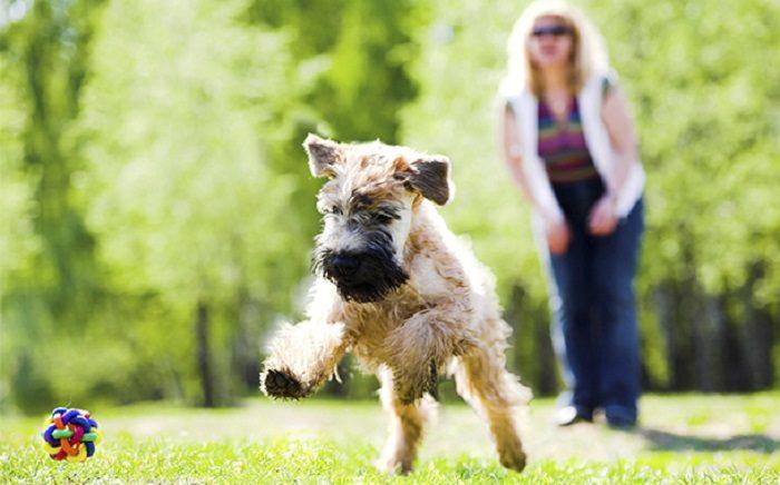 Как играть с собакой