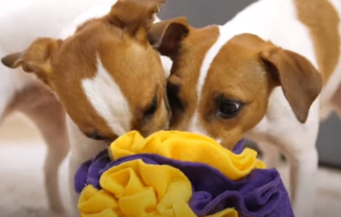 Нюхательный шар для собаки