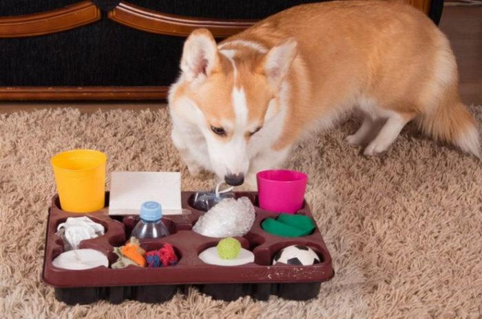 Во время игры собака обучается